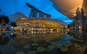 Wallpaper design, pond, Singapore, the evening, lights, trees, structure, Park, palm trees