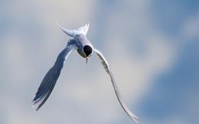 Picture the sky, bird, flight