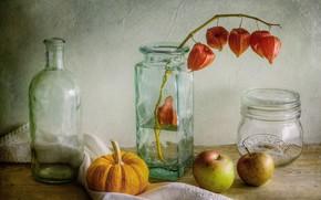 Picture apples, pumpkin, bottle, still life, physalis