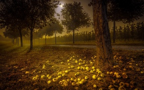 Picture road, night, apples