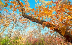 Wallpaper leaves, autumn, branches, the sky, tree