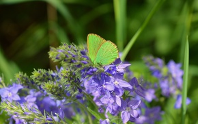 Picture Macro, Flowers, Spring, Butterfly, Flowers, Spring, Macro, Butterfly