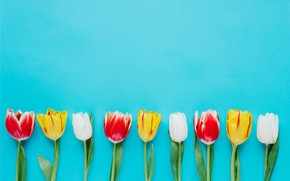 Picture flowers, colorful, tulips, fresh, flowers, tulips, spring