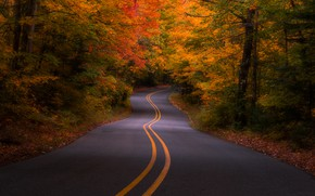 Wallpaper USA, forest, autumn, trees, road, Michigan