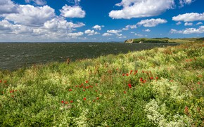 Picture sea, the sky, grass, the sun, clouds, flowers, coast, Maki, Germany, horizon, Thiessow