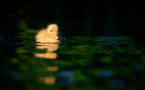 Picture baby, duck, duck