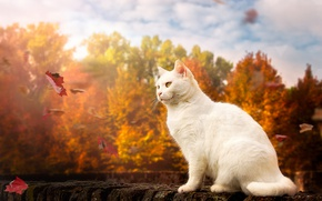 Wallpaper autumn, cat, leaves, white cat