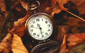 Picture leaves, watch, dry, maple, vintage, vintage, pocket watch, pocket watch