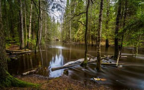 Picture trees, water, spill, forest