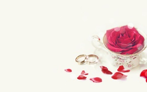Picture holiday, rose, wedding, rose petals, engagement rings