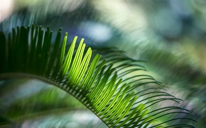 Picture sheet, green, plant