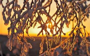 Picture branches, nature, winter, snow, light, macro, the sun