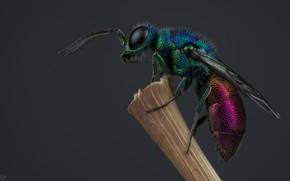 Wallpaper OSA, insect, OSA-bestanca