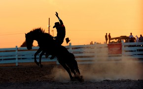 Picture horse, rider, Rodeo