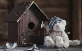 Picture toy, feathers, birdhouse, bear, Teddy bear