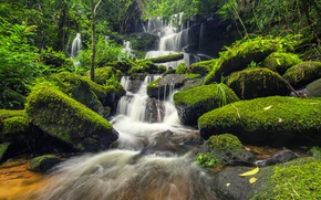 Picture forest, river, stones, green, waterfall, moss, forest, river, landscape, jungle, beautiful, waterfall, tropical