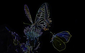 Picture lights, butterfly, silhouette, moth