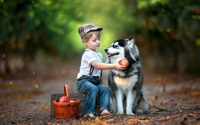 Picture animal, basket, dog, boy, fruit, box, child, husky, grenades, dog, bokeh