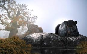 Picture water, tree, animal, stone, predator, Panther, Thai Phung