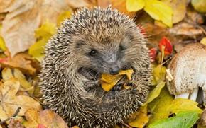 Wallpaper leaves, autumn, needles, tangle, nature, hedgehog