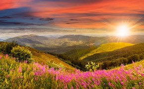 Picture forest, the sky, grass, the sun, clouds, rays, trees, flowers, mountains, meadow, panorama