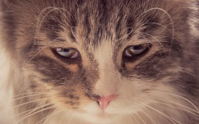 Picture cat, eyes, cat, mustache, light, sadness, look down