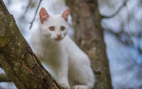 Picture white, tree, cat