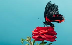 Picture flower, butterfly, Macro