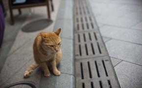 Picture cat, street, red, cat