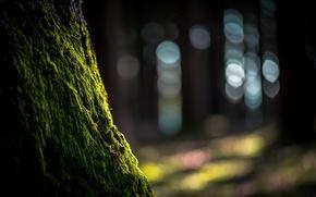 Wallpaper nature, moss, tree