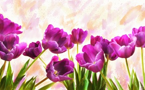 Picture flowers, background, figure, graphics, treatment, light, picture, art, purple, tulips, painting, drawing, strokes, lilac, digital …