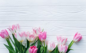 Picture flowers, background, Spring, Tulips