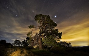 Picture night, nature, tree