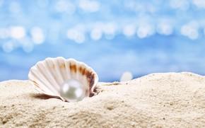Picture shell, pearl, sunshine, beach, sea, sand, seashell