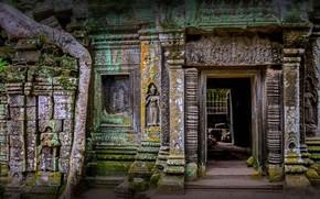 Wallpaper ruins, Agar, the temple of TA Prum, Cambodia