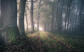 Wallpaper road, autumn, forest, fog