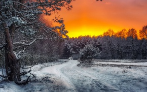 Picture winter, forest, sunset