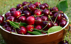 Picture leaves, nature, cherry, berries, Shine, food, harvest, Cup, bowl, a lot, cherry, juicy, juicy, delicious, …
