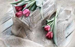 Wallpaper bag, Box, tulips, flowers