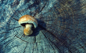 Picture wood, tree, mushroom