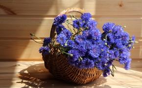 Wallpaper cottage, cornflowers, composition, flowers, summer
