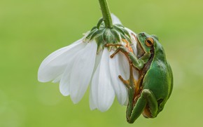 Picture flower, background, frog