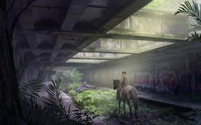 Picture graffiti, vegetation, rider, desolation, Horseman