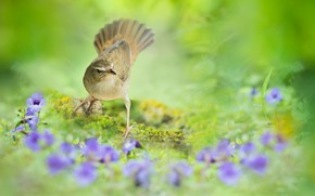 Picture flowers, background, bird