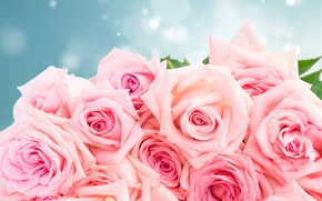 Wallpaper roses, bouquet, roses, pink roses, flowers, pink