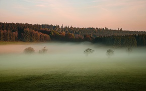 Picture field, trees, nature, fog