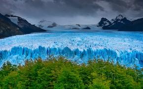 Picture trees, mountains, glacier, Argentina, Santa Cruz
