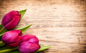 Picture flowers, bouquet, fresh, wood, pink, flowers, beautiful, tulips, pink tulips