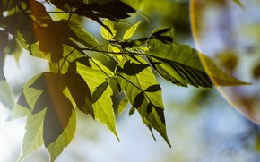 Picture tree, foliage, shadow, Summer, HELIOS 44/2