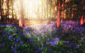 Picture forest, light, flowers, spring